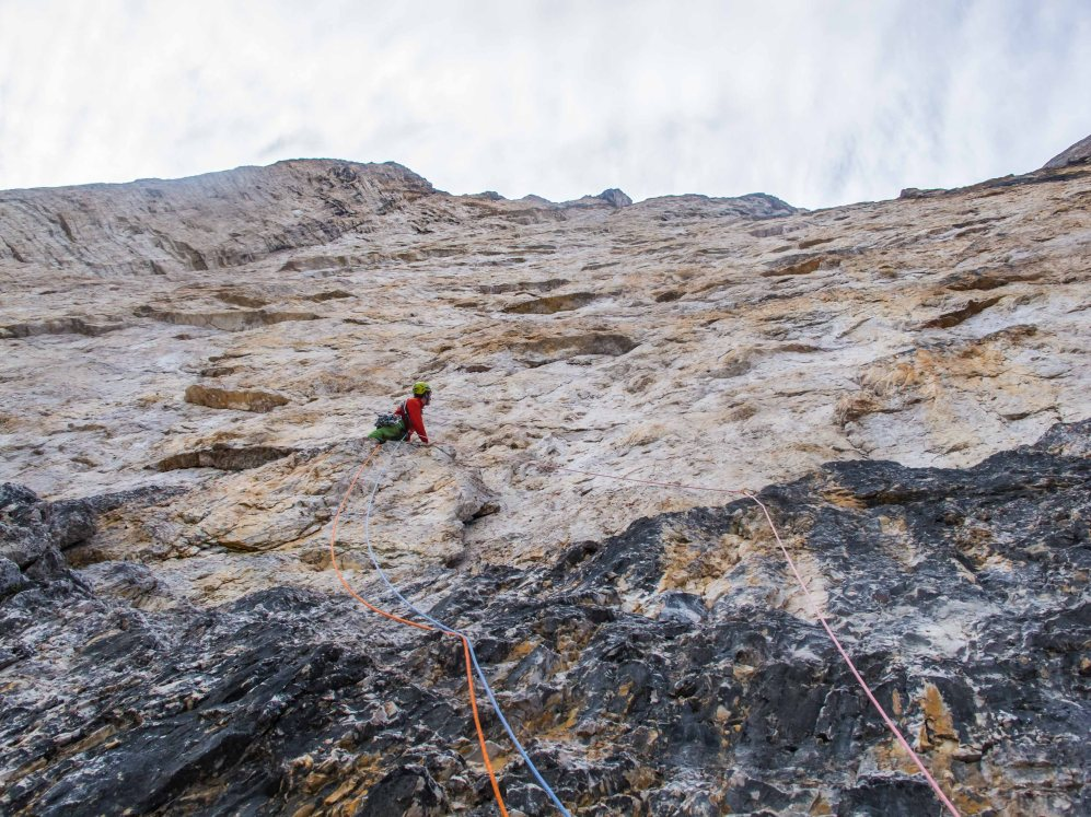 alpenrose on cima grande tre cime di lavaredo